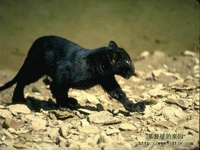 动物图片(二)